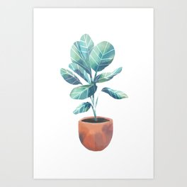 Green House Plant - Ficus Audrey Art Print