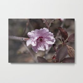 Plum Flower Metal Print