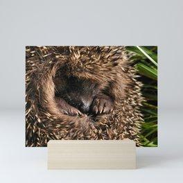 A rolled-up hedgehog Mini Art Print