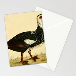 Muscovy Duck7 Stationery Cards