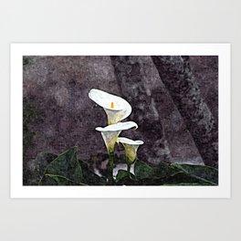Calla Lilies Flowers Garden Spring Art Print