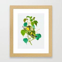 Hemlock Warbler Bird Framed Art Print
