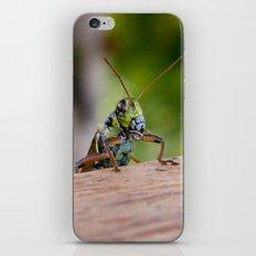 Peak-a-boo iPhone & iPod Skin