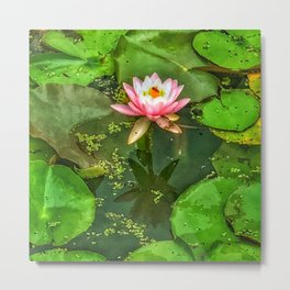 Waterlily and Lilypads Metal Print