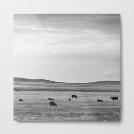 Black and White Cows Metal Print