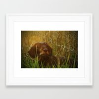 daschund Framed Art Prints featuring Evening Photo Shoot by Dorothy Pinder