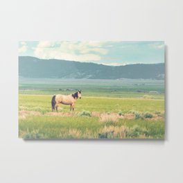 Summer Pasture Metal Print