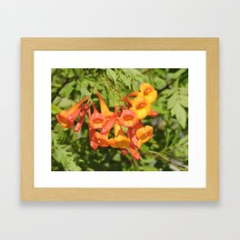 Natural Brass Blowing in the Breeze Framed Art Print