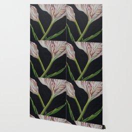 Striped Tulip on Black Wallpaper