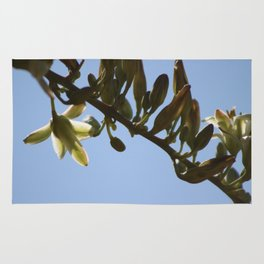 Closeup of  Hesperaloe Parviflora Flower at Sunnyland in Sun Rug