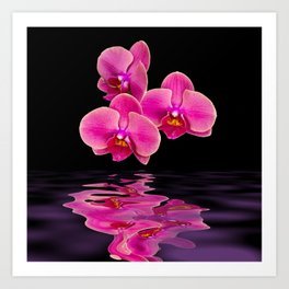 Mystical Pink Orchids Reflections Art Print