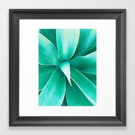 california agave. Framed Art Print