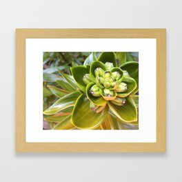 Flower Bud Framed Art Print