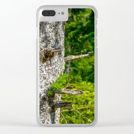 Tree Trunk with short thick Branch Stumps Clear iPhone Case