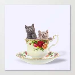 Tea Cup Kitties Canvas Print