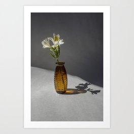 Shadow and Flower #2 Art Print