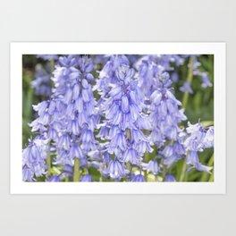 Bluebell Flora Art Print