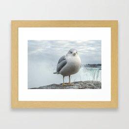 Seagull Model Framed Art Print