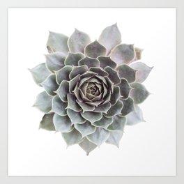 Succulent burst Art Print