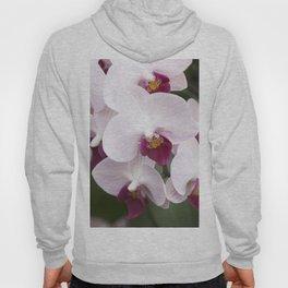 Longwood Gardens Orchid Extravaganza 4 Hoody