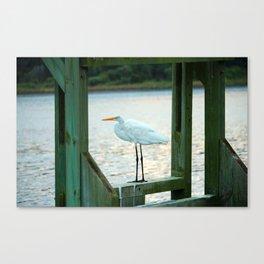 Egret Keeping Watch Canvas Print
