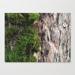 Tree Moos Canvas Print