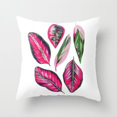 Calathea pink leaves Throw Pillow