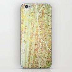 White Birch Trees - Yellow iPhone & iPod Skin