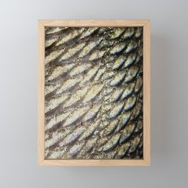 Redfish Scales Framed Mini Art Print