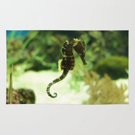 Tropical Seahorse with Coral Rug