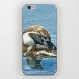 Humboldt penguin (Spheniscus humboldti) iPhone Skin