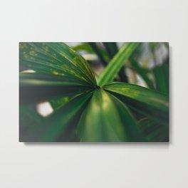 Leaf Bridge Metal Print
