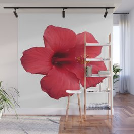 Stunning Red Hibiscus Flower Wall Mural
