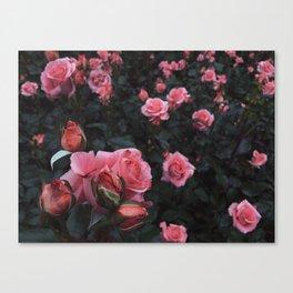Tina pink Canvas Print