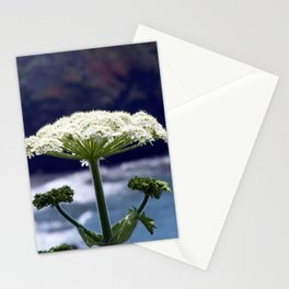 Floral. Stationery Cards