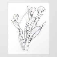 Calla Lily Point Art Print