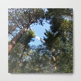 Nature Forest Hiking Metal Print