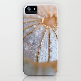 Sea Urchin Shell iPhone Case