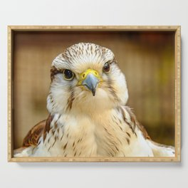 Gyrfalcon Falcon Closeup Serving Tray