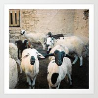 morrocan Art Prints featuring Sheep in Morrocan desert (color) by Hanke Arkenbout