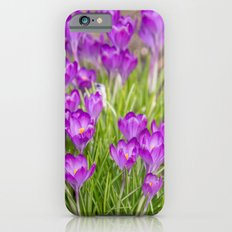Spring crocus iPhone 6s Slim Case