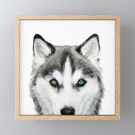 Siberian Husky dog with two eye color Dog illustration original painting print Framed Mini Art Print