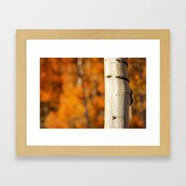 Quaking Aspen - Fall Framed Art Print