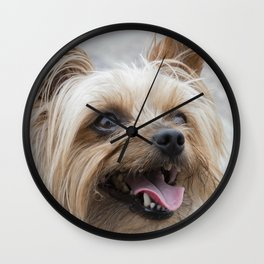 shitzu dog Wall Clock