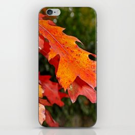 leaves in Autumn iPhone Skin
