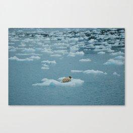 Sea lion on iceberg Canvas Print