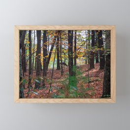 Catskills Forest in Autumn Framed Mini Art Print