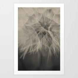 Black & White Dandelion Art Print