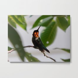 Ruby in the sunshine Metal Print