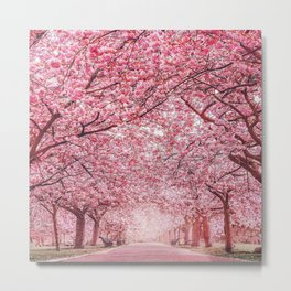 Cherry Blossom in Greenwich Park Metal Print